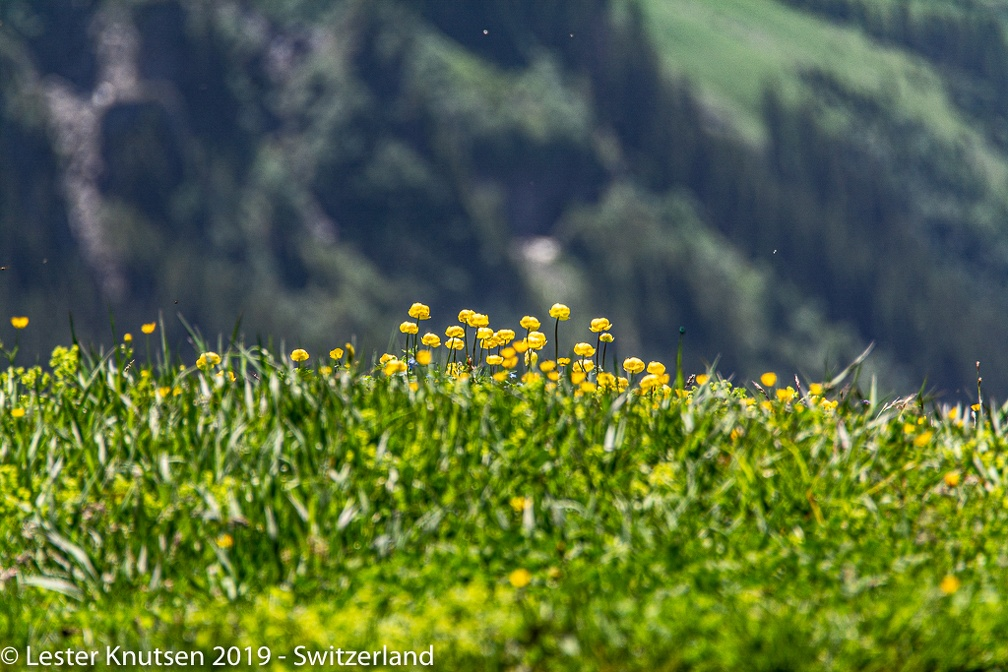 LesterKnutsen2019 Switzerland DSC5344