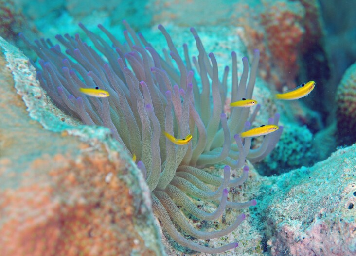 Dive 42 Forest DSC 4252 edited 1